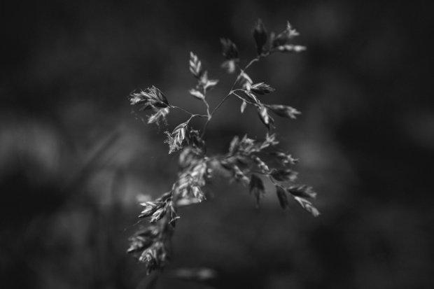 LynziBergPhotography